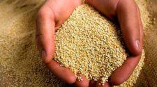 peruvian-quinoa